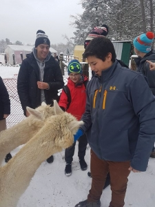 What's not to love about an alpaca?